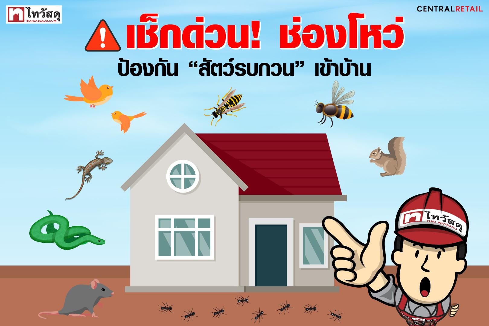 เช็กด่วน! ช่องโหว่ ป้องกันสัตว์รบกวนเข้าบ้าน
